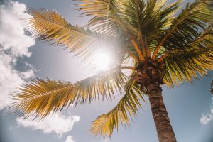 A palm tree in the sun