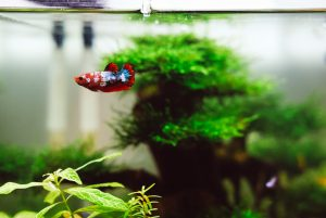 In order to pack and move a fish tank, you need to come up with a good plan of action and be extra careful.