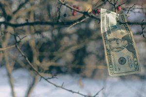 Money growing on tree in winter