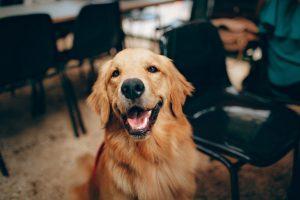 A pretty dog