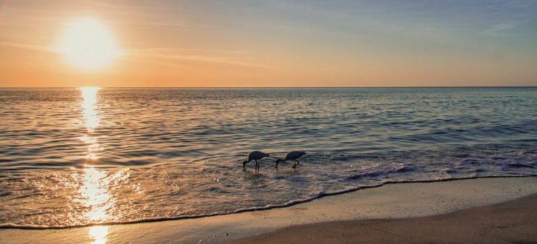 a beach and sunset