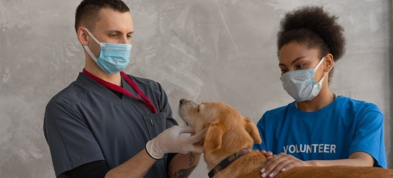 Woman holding a dog while the vet is checking on him